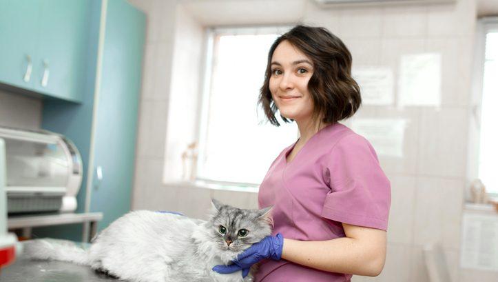 how to become a vet nurse